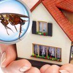 افضل مكافحة حشرات بالشارقة
