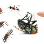 شركات مكافحة حشرات بالشارقة