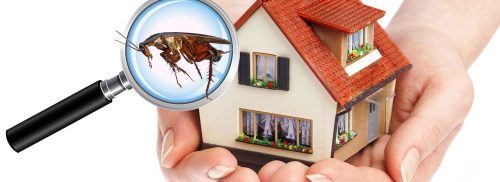 مكافحة حشرات فى الشارقه