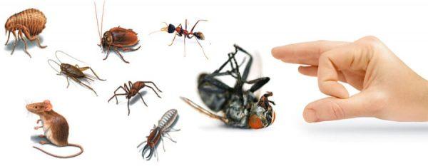 شركات لمكافحه الحشرات بالشارقه