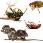 شركة مكافحة الحشرات الشارقه
