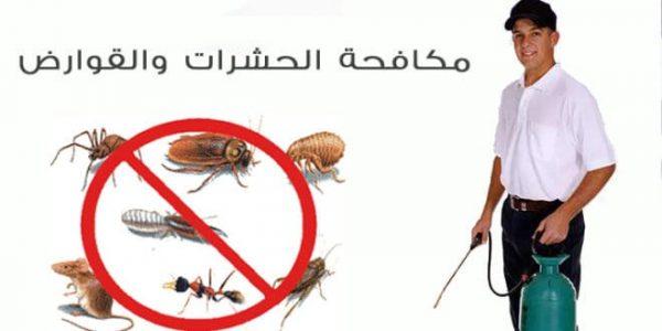 شركات مكافحة الحشرات بالشارقة