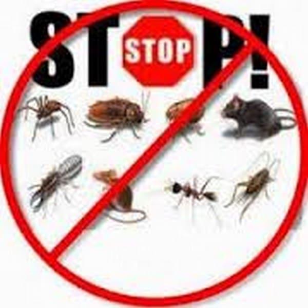 شركات رش حشرات بالشارقة