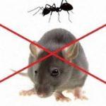 شركة مكافحة الحشرات بالشارقة