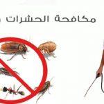 افضل مكافحة حشرات الشارقة