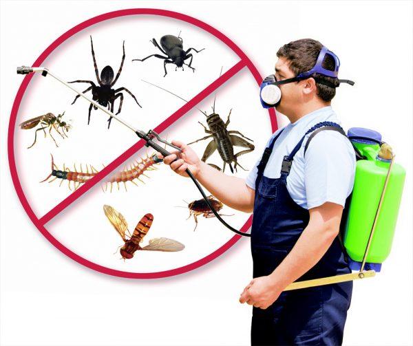 مكافحه النمل الابيض بالشارقه