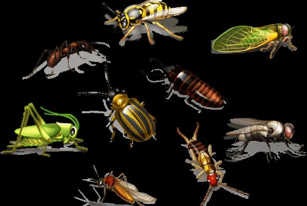 مكافحة النمل الأبيض بالشارقة