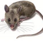 مكافحه الفئران فى الشارقه