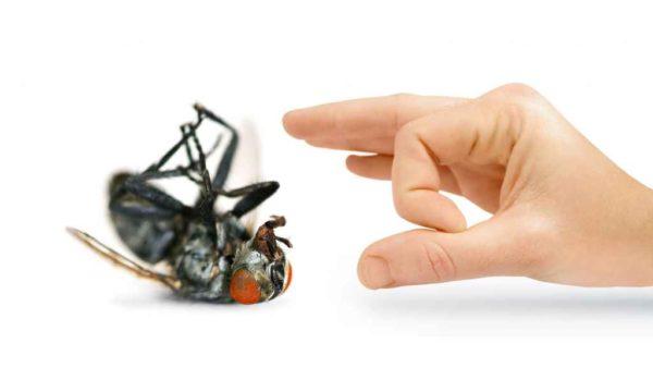 مكافحه حشرات فى الشارقة