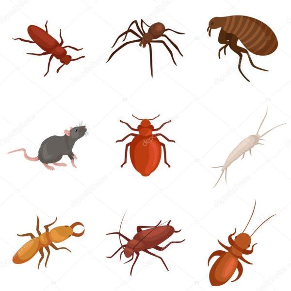 مكافحة حشرات لدى الشارقه