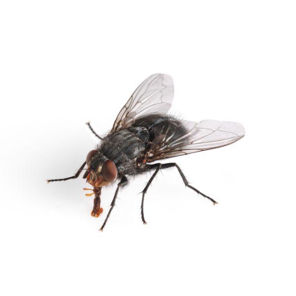 مكافحه حشره الذباب بالشارقه