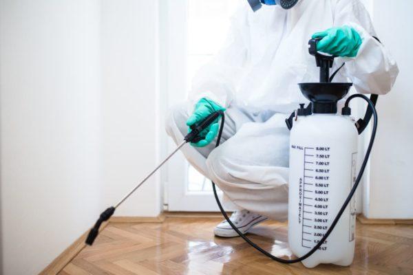 شركات مكافحة الحشرات بالشارقه