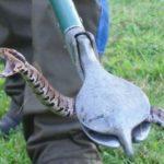 أرخص مكافحة ثعابين بالشارقة